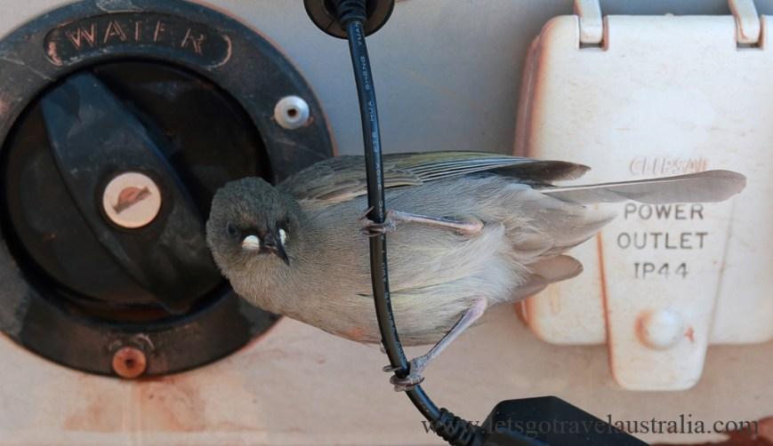 Thirsty-Birdie_2554