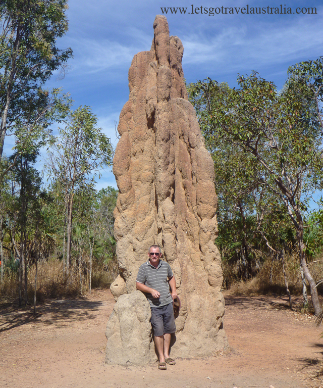 Cathedral-Termite-Mound