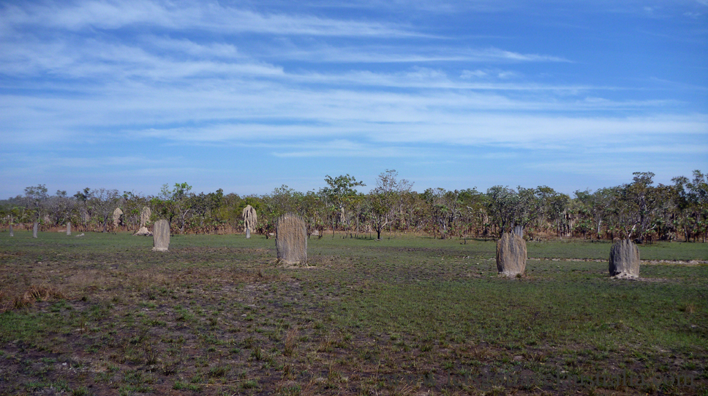 Termite-Mounds-1