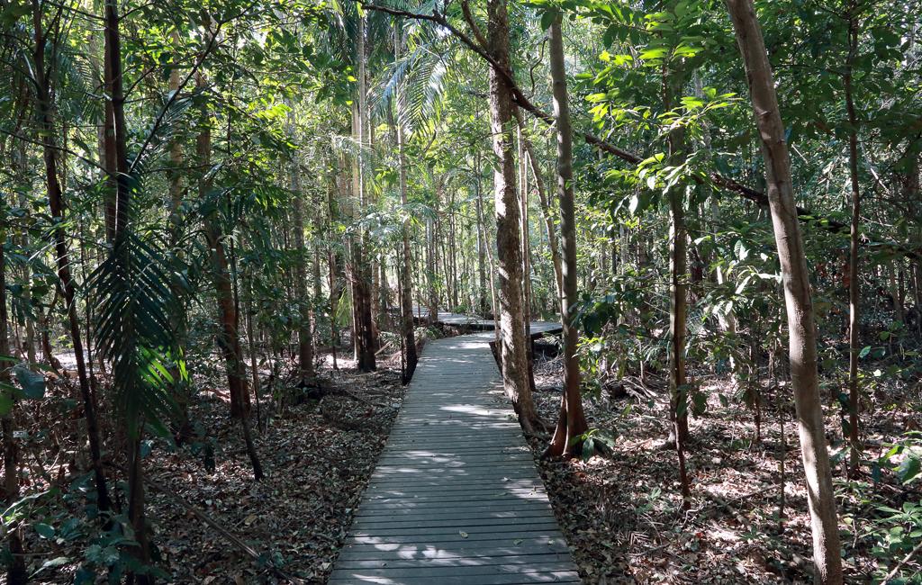 Wangi-Boardwalk
