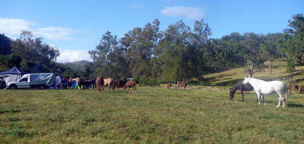 Friendly-Horses