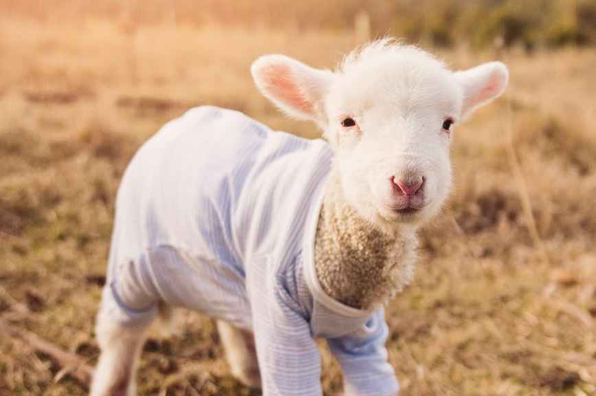 Lamb confrontation a 'humanising' experience
