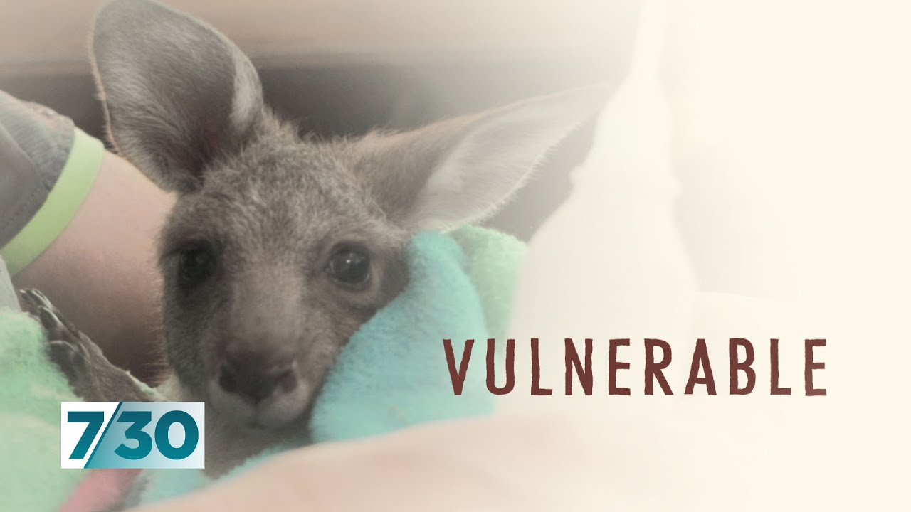 The wildlife carers doing amazing work in tough times