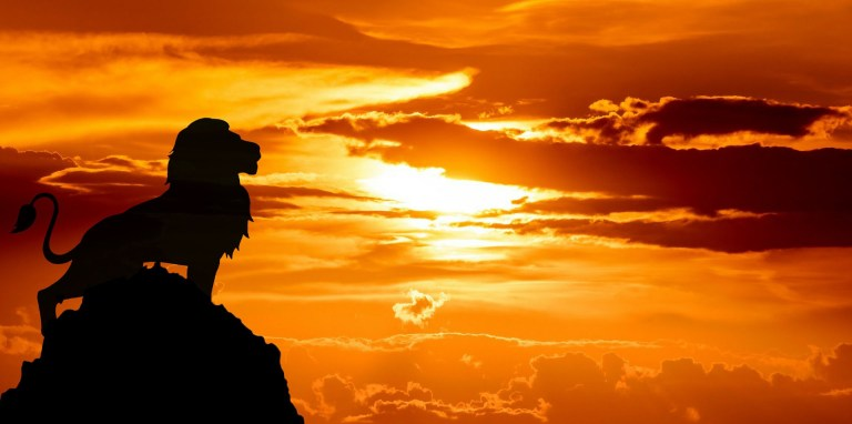 lion on a mountain at sunset