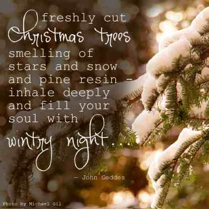 """""""...freshly cut Christmas trees smelling of stars and snow and pine resin - inhale deeply and fill your soul with wintry night..."""" ― John Geddes, A Familiar Rain"""