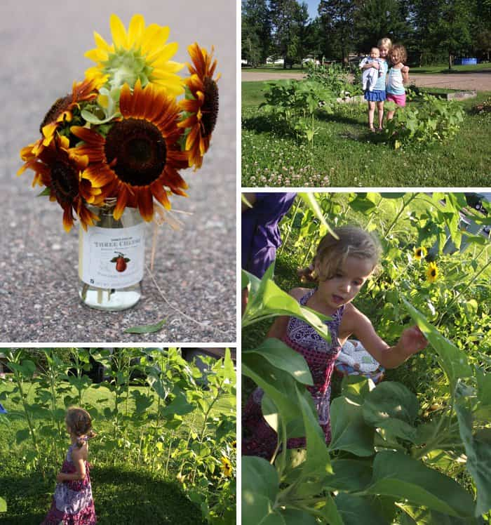 How to Build a Sunflower Fort