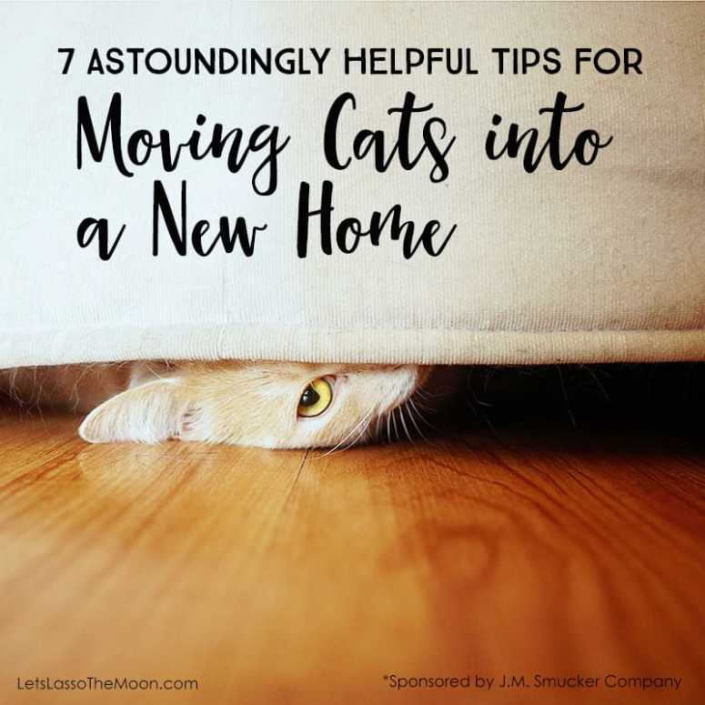 7 astoundingly helpful tips for moving cats into a new home lasso