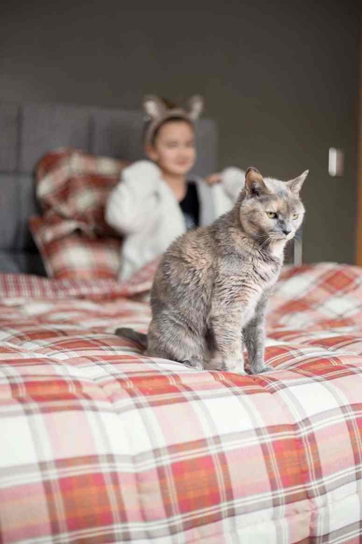 Pet photography - Cat portrait