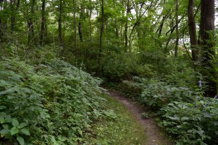 Phipps Prairie Park - The easier of the two trails is still enjoyable.