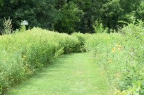 Phipps Prairie Park - Walking through the prairie is lovely as pollenators fly around you.