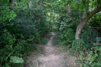 Stephens Park - The trail at Stephens Park will make you forget that you're so close to downtown Moline.