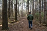 """Big River State Forest features a trail called """"Big Pines."""""""