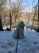 Kaia on snowy bank at Wildcat Den Park