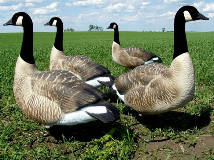 Flocked Goose Hunting Decoy