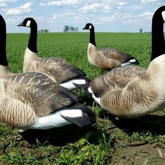 Flocked Goose Hunting Decoy
