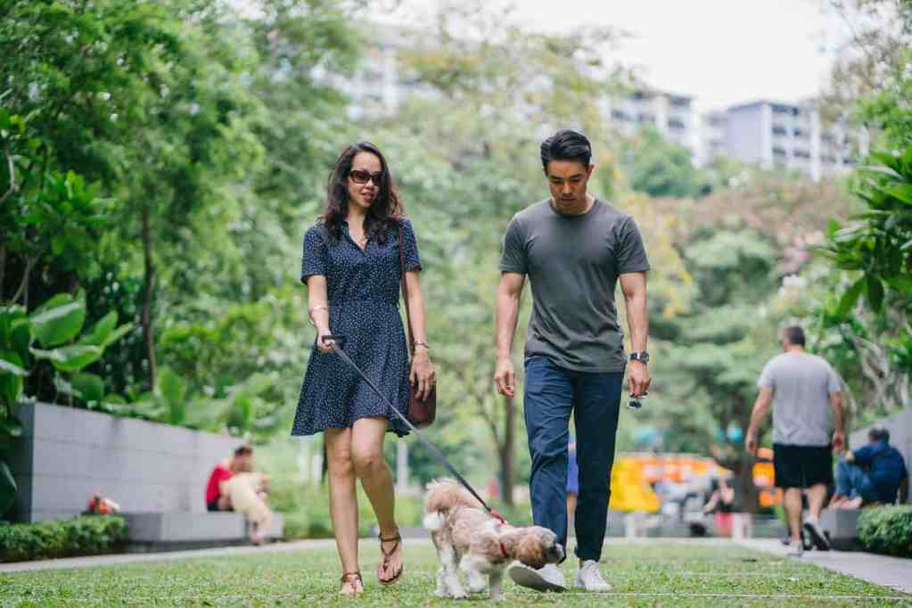 How Your Pet Can Make You More Successful