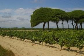 Domaines viticoles des vins des Sables