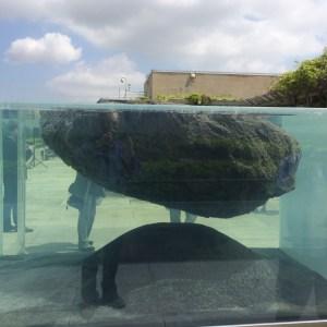 Huyghe roof garden installation, the aquarium element