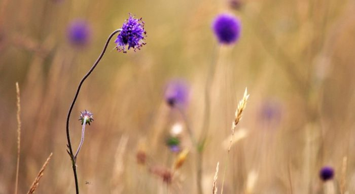 a purple flower in a brown field