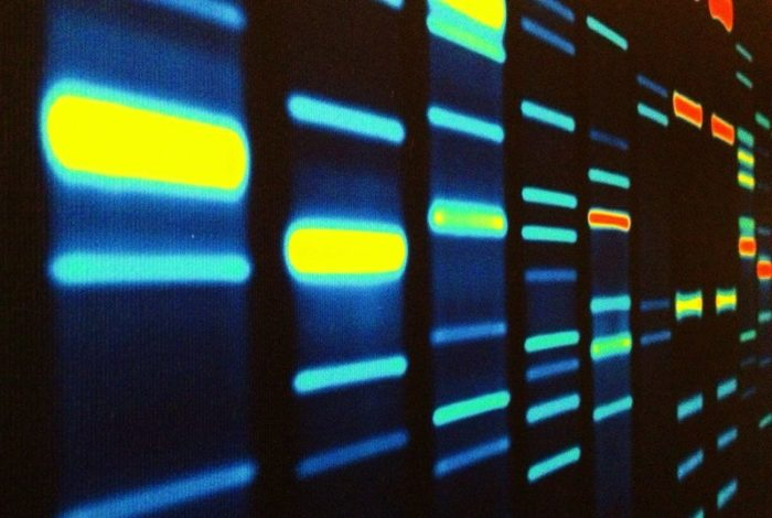 Image of DNA reading with bars of bright yellow, medium blue, aqua, and red against a black background