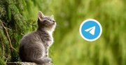 Telegram Login Widget,製作用 Telegram 登入功能