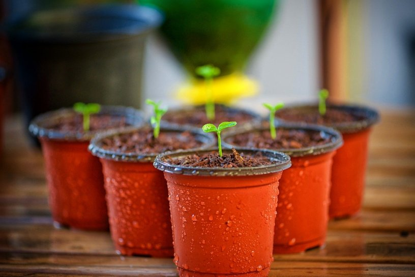 Six small orange seedling starter pots. Each post has water condensation droplets covering them. They sit on a wood slat bench. Each pot has one green seedling poking up out of the dirt.