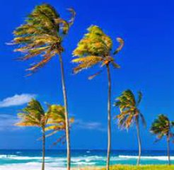 cropped-palm-trees-blowing.jpg