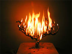 burning-bush