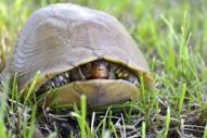 Defensive turtle