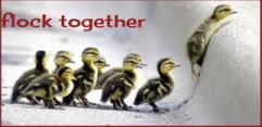 flock together
