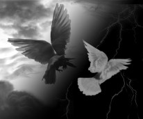 crow and dove