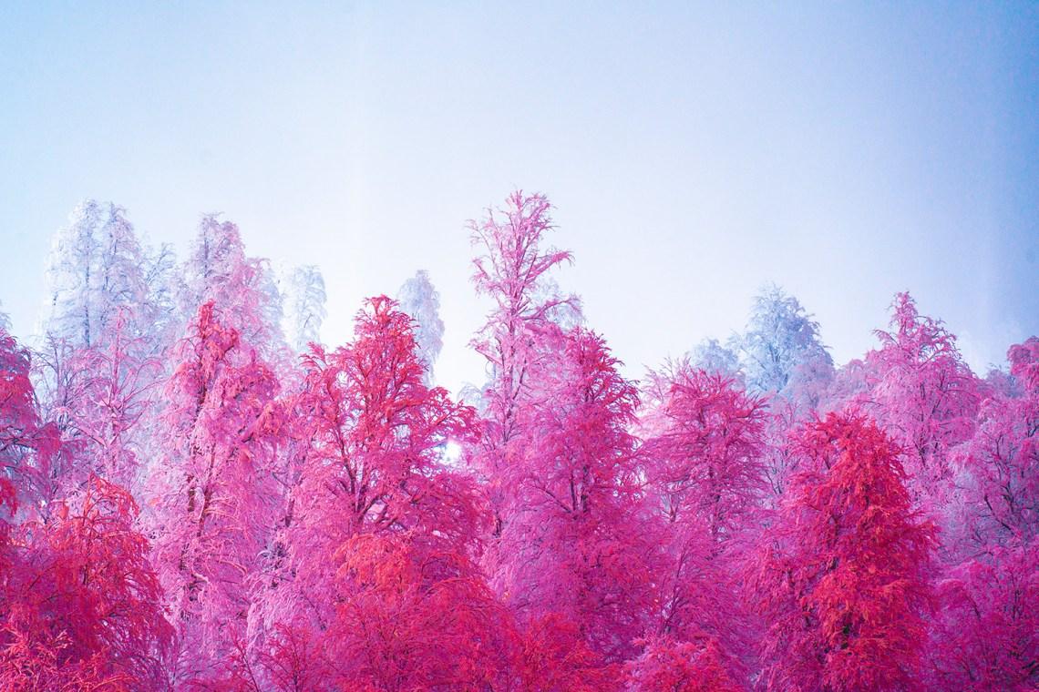 L'artiste Thisset et sa série «Sweet Winter»