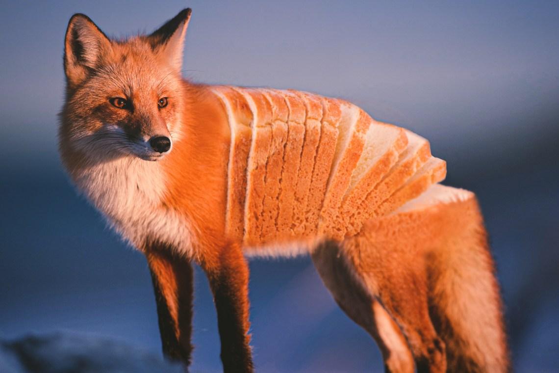 Les animaux chimériques de Ronald Ong