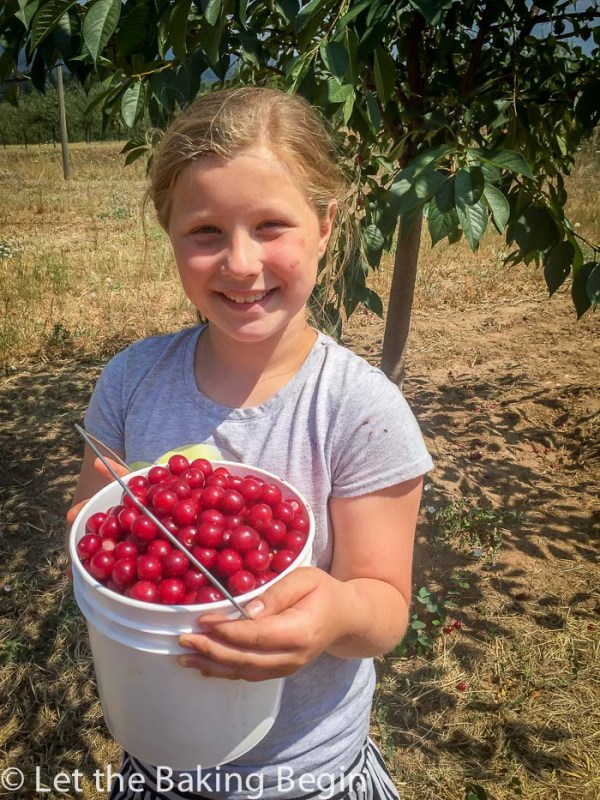 Daughter with a bucket full of fresh cherries.