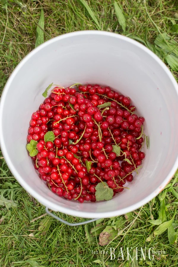 Red Currants| Let the Baking Begin