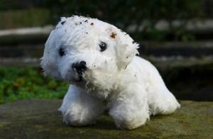Lost white dog toy