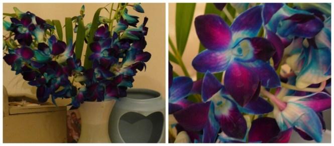serenata flowers blue dendrobium