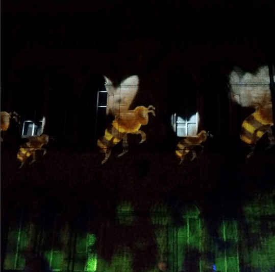 bury light night bees