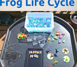 frog life cycle tuff spot