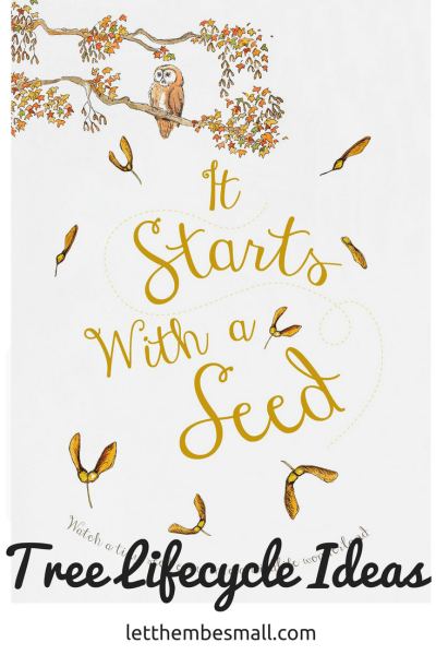 Tree lifecyle ideas for pre-schoolers using the it starts with a seed book as the basis for inspiration