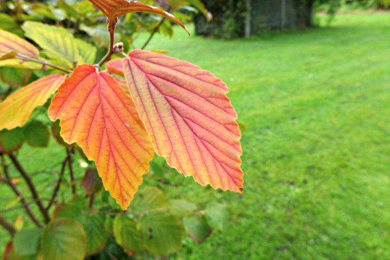 autumn equinox nature walk