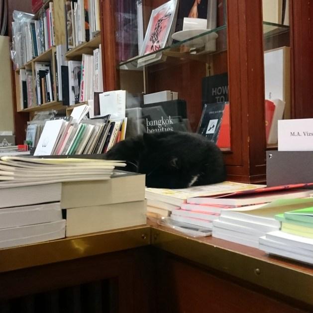 Motto: gatto appisolato sui libri