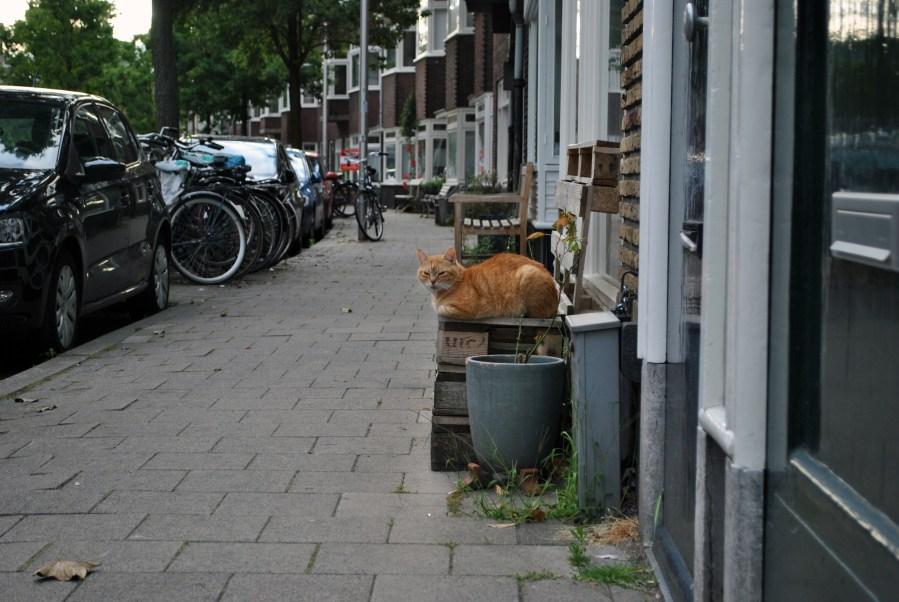 Utrecht, città della letteratura Unesco | Gatto