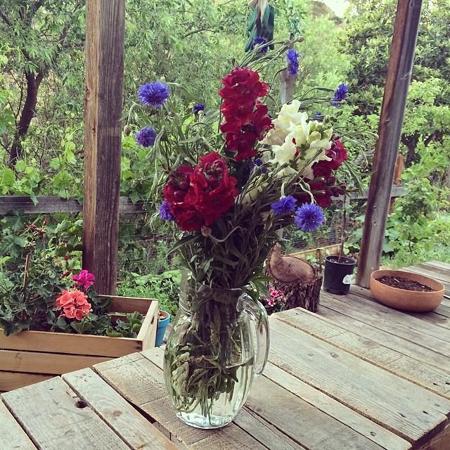 خودکفایی در عرصه تولید گل و گیاه #levasfarm #gardening #pinolehome #pinole #home