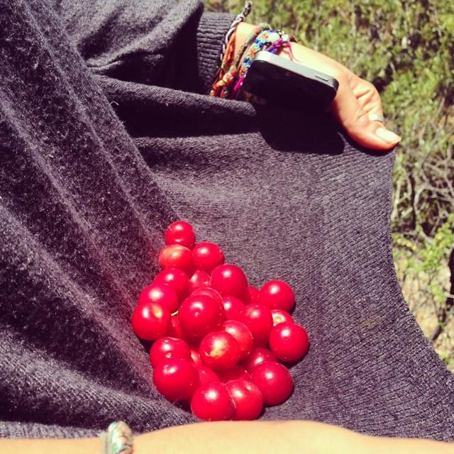 یه دامن آلوچه #pinolehome #pinole #levasfarm #gardening #farming #fruititup