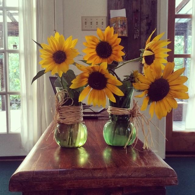 شاعر میگه گل هام گل آفتابگردون میترسه دلم از بارون یا رب تو شب مهتابی، لیلا رو نگیر از مجنون ااااه #pinole #pinolehome #naturedesign