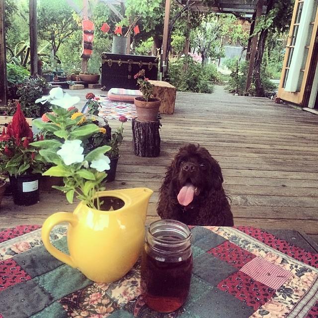 I want tea too#lorka #teatime #teapotplanter #pinolehome #pinole