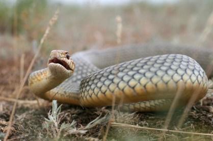 змеи Ростовской области
