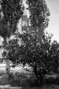 nsb_levent_3_71 © LEVENT ŞEN