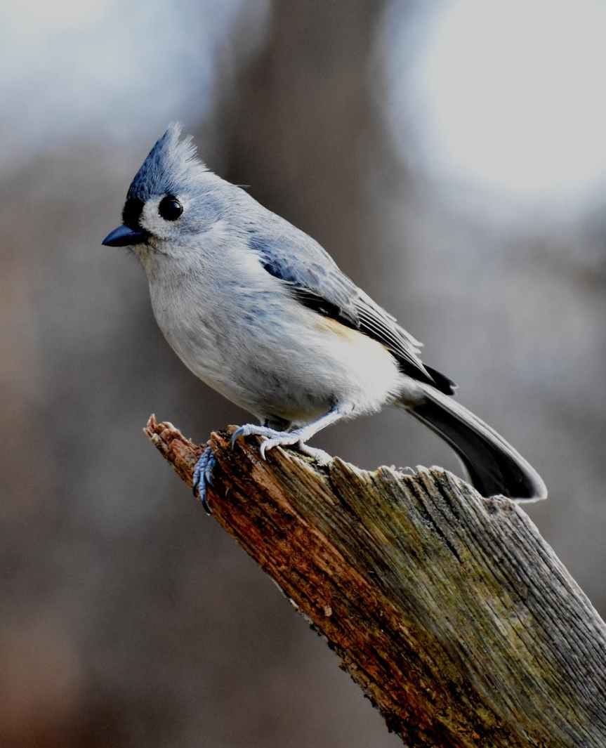 Building a Mystery with Blue Jays